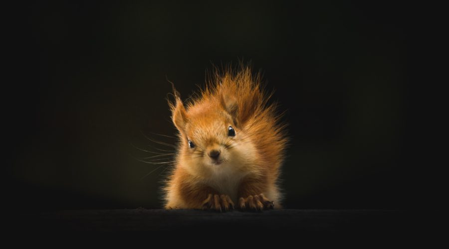 Keep on Squirrelling, with Gary Edwards